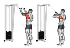 Download Exercising. Cable Rope Rear Delt Rows Stock Illustration - Image: 67871989