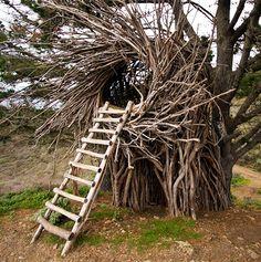 muufi • sharanga: There's no place like…Treebones...