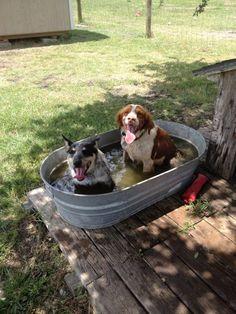 summer dogs!