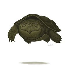 "(@adam_f_watkins) on Instagram: ""Here's a turtle."""
