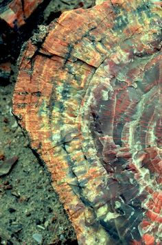 Petrified wood, tree rings replaced by Quartz and other minerals.  Look at those colors.