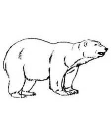 google polar bear coloring pages - photo#32