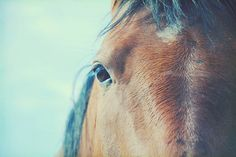 horse 3 by mrs. french, via Flickr