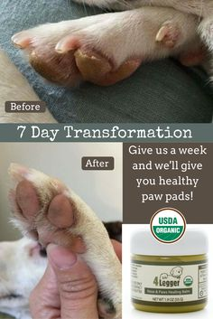 Give us 7 days with your dog's dry nose or dry paw pads and we will transform them back to healthy!