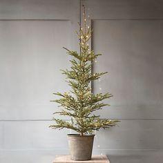 Fresh Tabletop Black Spruce