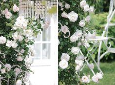 Rosor vita ljusrosa, Roses white and light pink