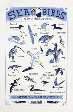 Seabirds tea towel – ToDryFor