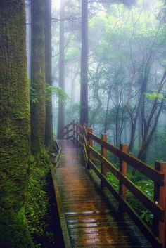 The wet wooden path by Hanson Mao