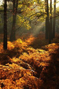 Forêt de Larçay by Patrice Minard