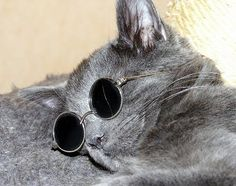 Very special glasses for cats | Life Time