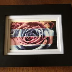 Rose photograph, pink rose, multi-color, photograpy, art, by Frogkissers on Etsy https://www.etsy.com/listing/249780910/rose-photograph-pink-rose-multi-color