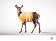 Volkswagen Bi-xenon lights: Deer