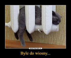 Funny cat sleeping sweetly in the radiator. Very cool when is warm. I Love Cats, Cute Cats, Funny Cats, Funny Animals, Cute Animals, Wild Animals, Baby Animals, Crazy Cat Lady, Crazy Cats