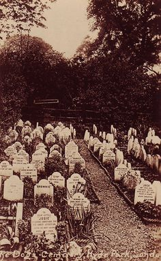 Photo postcard showing the dog cemetery on the north side of Hyde Park, near Victoria Gate, the cemetery was in use for nearly 40 years, around the end of the nineteenth century.  Packed tightly together in a now neglected patch of ground behind Victoria Lodge lie the graves and memorials of some 200 cherished pets. It is thought that the first burial took place here when a dog belonging to the Duke of Cambridge died in the lodge, and it later became fashionable.