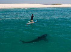 Un maldito gran tiburón