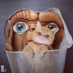 Doppelgangers!  #exoticshorthair #cat #cute #instacat #flatface  #cats #catsagram  #animallovers #kitten #meow #pet #mreggs #catlover #petsagram #catstagram #exoticsofinstagram #smushface #katze #sirpumpkin
