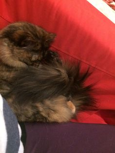Using her tail as a blanket http://ift.tt/2rCgRe4