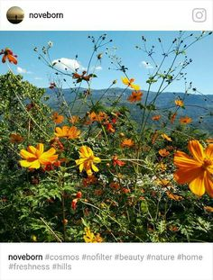 Nature love. Blossoms. Darjeeling.