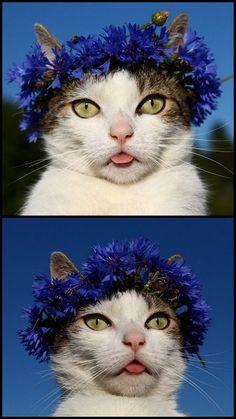 Pâté wearing a knapweed flower crown.