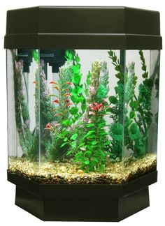 5 Gallon Eco-hexagon Aquarium Kit