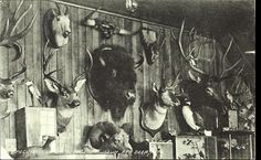 Postcard 10883: Rumsey & Co, Specimens in Dr. George's Museum, Red Deer, Alta. (c)