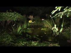 ▶ Create A Paradise - Aquascape LED Lighting - YouTube