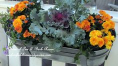 Fall Container Garden (ornamental cabbages and kales are edible) | Our Fairfield Home & Garden