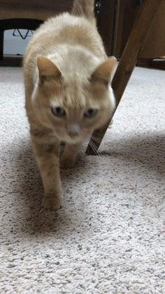 This is how my cat likes to greet me Click here for more adorable animal pics!