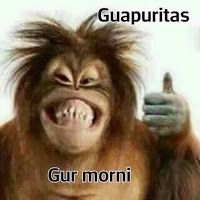 gbeze # African humor, spelling, definition pdf, humorous t . Mexican Funny Memes, Mexican Humor, Funny Spanish Memes, Spanish Humor, Funny Animal Pictures, Funny Images, Funny Animals, Memes Funny Faces, Funny Quotes