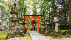 #japan #osaka #castle #samurai #ninja #manga  #japanese #lifegourmets #travel #traveling #TFLers #vacation #visiting #instatravel #instago #instagood #trip #holiday #photooftheday #fun #travelling #tourism #tourist #instapassport #instatraveling #mytravelgram #travelgram #travelingram