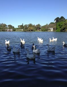 Lago de Palermo. Buenos Aires. - - A very nice place to visit before or after your Spanish classes in Buenos Aires - www.elpasajespanish.com