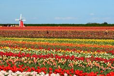 Five Reasons to Learn Dutch, from Boredom to Gardening...