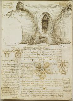 Leonardo da Vinci's Rare Anatomical Drawings | Brain Pickings: Drawing of external genitalia and vagina, with notes; notes on the anal sphincter and diagrams of suggested arrangement of its fibers and its mode of action. Royal Collection © Her Majesty Queen Elizabeth II