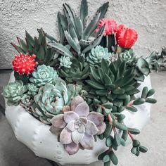 Natalie Linda (@itsnatalielinda) • Instagram photos and videos Succulent Outdoor, Succulent Gardening, Succulent Care, Planting Succulents, Propagating Succulents, Container Gardening, Cactus House Plants, Pot Plants, Plants Indoor