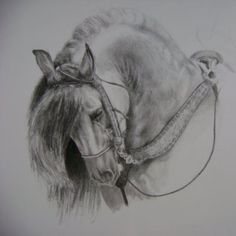 charcoal drawing horse - Google Search