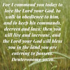 Deuteronomy For I command you today to love the LORD your God, to walk in obedience to him, and to keep his commands, decrees and laws; then you will live and increase, and the LORD your God will bless you in the King Jesus, Jesus Is Lord, Scripture Quotes, Bible Scriptures, Love The Lord, Gods Love, Deuteronomy 30, Bible Teachings, Gods Promises