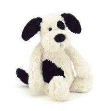 Hund Bashful - schwarz und cremefarben