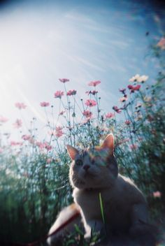 CAT COSMOS FLOWERS FILMPHOTOGRAPHY TOY CAMERA