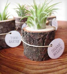 Tiny Air Plant & Tree Stump. Great idea for wedding favors