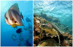 Fish, Pets, Animals, Snorkeling, The Maldives, Diving, Animaux, Animal, Animales