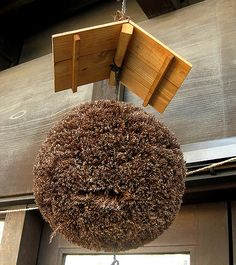 """These large balls are hung outside of Sake Breweries: It's called """"sugitama"""" and made of Japanese cedar. A brewer hang this thing when a new sake is made. People can tell how mature that sake has become by seeing how brown the sugitama gets 