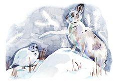 BBC Wildlife - Holly Exley Illustration