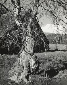 Ranch near Yosemite Valley, California (ca. 1936) Ansel Adams