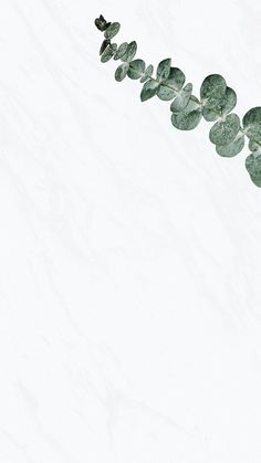 Download premium image of Eucalyptus silver dollar white marble wallpaper by Sasi about background minimal, marble background, android wallpaper, backgrounds, and blank space 2589792
