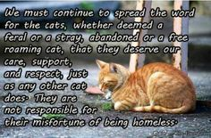 Stray cats Most stray or feral cats are results of irresponsible owners. Please I can't exspress it enough Spay or Neuter