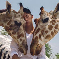 ▷ @xxdaniel - XXDanieL Pro Photographer - 攝影師被長頸鹿🦒踢。成就達成! #XXDANIEL #photography #photographer Heaven On Earth, More Photos, Giraffe, Safari, Travel Photography, Asian, Guys, Animals, Instagram