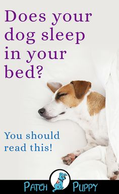 Should Our Dogs Share Our Bed The Pros and Cons of Cosleeping is part of Sleeping puppies - Dogs share our beds all the time But is it the right choice for everyone There are pros and cons to sharing your bed with your dog Dog Sleeping In Bed, Sleeping Puppies, Tattoo Silhouette, Derp Dogs, Best Dog Training, Training Pads, Brain Training, Frozen Dog Treats, Hair