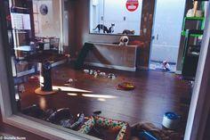 Quem adora os animais não perde uma boa chance de estar pertinho deles. Mas o meio ambiente e a vida selvagem precisam estar em primeiro lugar sempre. Com zoológicos, aquários e outros estabelecimentos do tipo adotando novas práticas que visam o bem-estar dos bichos, eis que surge o primeiro cat café do Brasil no estado de São Paulo, mais consciente do que qualquer outro ao redor do mundo. Localizado em Sorocaba, a cerca de duas horas de carro da capital, o Café com Gato mantém os felinos…