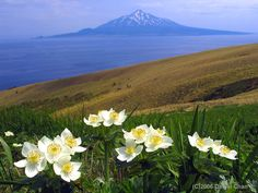 See the scenery and wild flowers of the Rebun and Rishiri Islands in Japan.