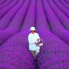 200 Unids/bolsa francés provence lavanda semillas muy fragante lavanda orgánica semillas de plantas de flores semillas de Flores Bonsai Jardín de Su Casa